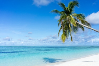 beautiful tropical beach and sea with coconut tree