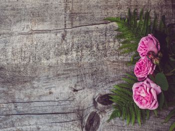 Beautiful bouquet of blooming peonies lying on unpainted, frayed boards. Place for your inscription. Top view, close-up. Greetings from loved ones, family, friends and colleagues. Beautiful, spring flowers lying on shabby boards