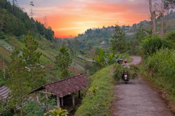 Transporting grass in the countryside from Java Indonesia at sunset