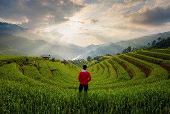 An Asian man watching at paddy rice terraces, agricultural fields in countryside of Mu Cang Chai, Yen Bai, mountain hills valley on summer in travel trip and holidays vacation concept, Vietnam.