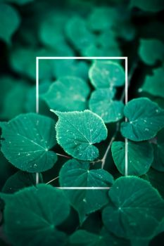 Creative foliage layout with thin white frame. Forest bush. Nature. Copyspace.. Creative foliage layout with thin white frame.