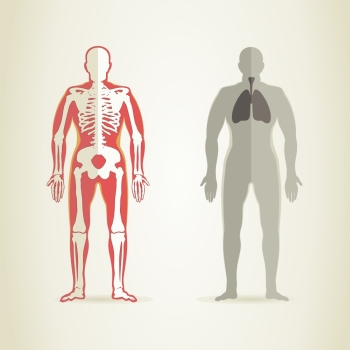 Human anatomy and skeleton. A vector illustration