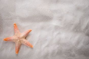 starfish on the sand with copy space for summer concept.