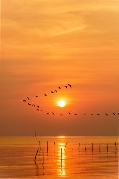 Flock of seagulls bird flying in a line through the bright yellow sun on orange light sky and sunlight reflect the water of the sea beautiful nature landscape at sunrise, sunset background, Thailand. Seagulls flying in a line through the sun at sunset