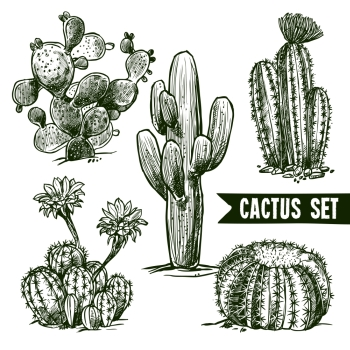 Different shapes desert and domestic cactus sketch set isolated vector illustration. Cactus Sketch Set