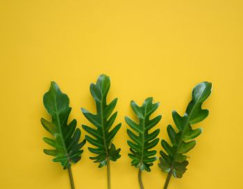 Tropical green leaves on vibrant yellow background with copy space. Nature concept