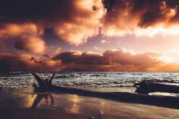 Seashore in the sunset after storm. Wild nature, beach and fallen tree. Cloudy dramatic sky.. Seashore in the sunset after storm.
