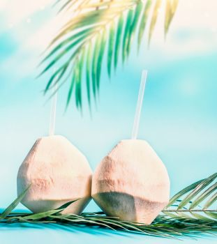 Two fresh coconut cocktails with tropical leaves at blue sky background with hanging palm leaves and sunshine. Tropical vacation. Summer holiday. Beach party. Healthy natural coconut water drink