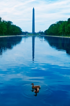 Washington Monument morning reflecting pool with ducks in US USA