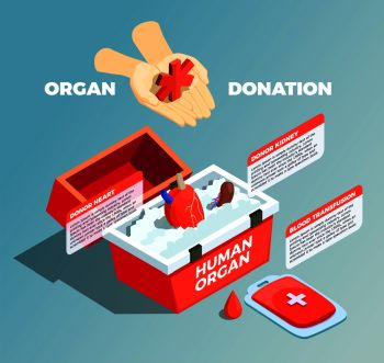 Organ donation isometric composition with donor kidney and donor heart in medical container and blood bad used for transfusion vector illustration. Organ Donation Isometric Composition