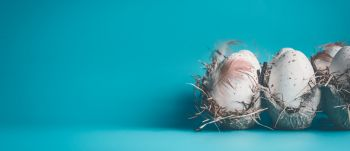 Eggs with feathers in carton box  package on blue background, front view, banner. Easter concept