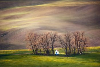 Lines and waves with trees and chapel in the spring in area known as Moravian Tuscany, South Moravia, Czech Republic. Lines and waves with trees and chapel in the spring, South Moravia, Czech Republic