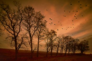 Flying birds. Autumn evening landscape.