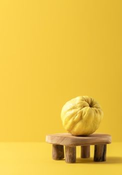 Just one quince fruit, freshly harvested, on a teeny tiny wooden table, isolated on yellow paper background. Tasty golden autumn fruit. Fall fruits.
