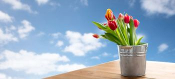 flora and gardening concept - red tulip flowers in tin bucket on wooden table over blue sky and clouds background. red tulip flowers in tin bucket on table