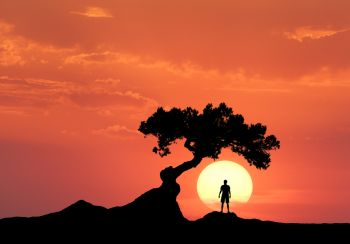 Man under the crooked tree on the background of sun. Silhouette of a standing sporty man on the mountain and colorful orange sky with clouds at sunset. Beautiful landscape in the evening. Travel